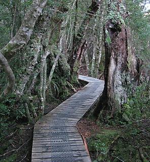 Dove lake trail