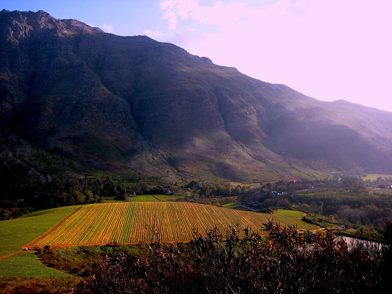 Stark-Conde Vineyards, Stellenbosch