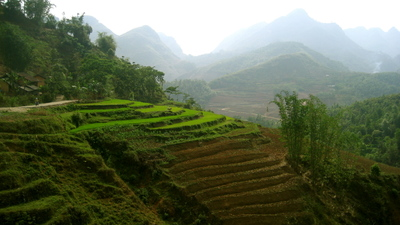 Rice_terraces_5